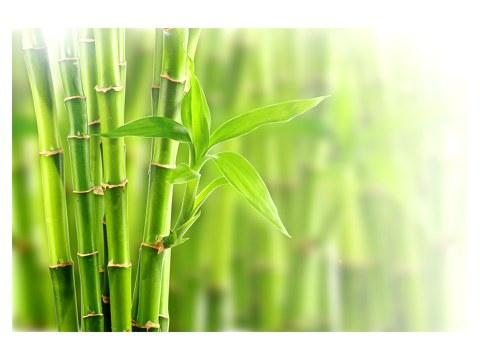 imágenes de bambú