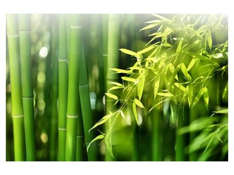 imagen de bambú