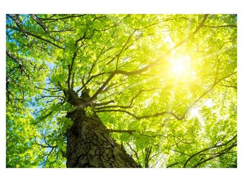 los rayos del sol de árboles