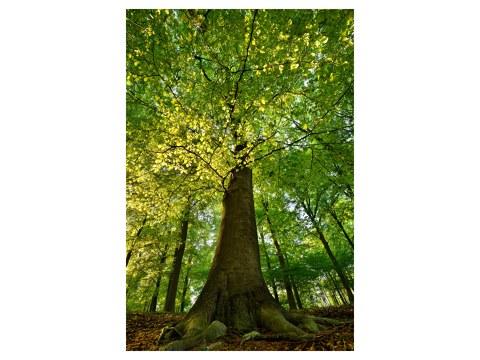 árboles fotos