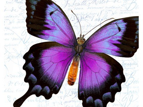 imagen de la mariposa