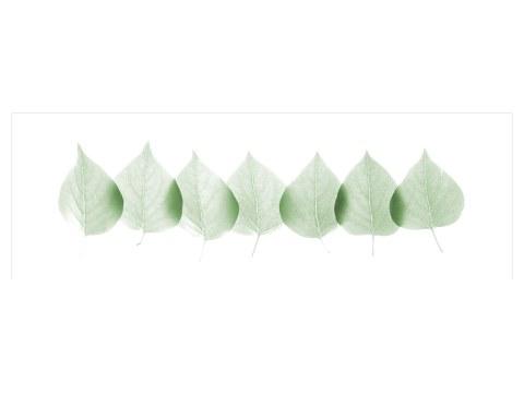 hojas imágenes