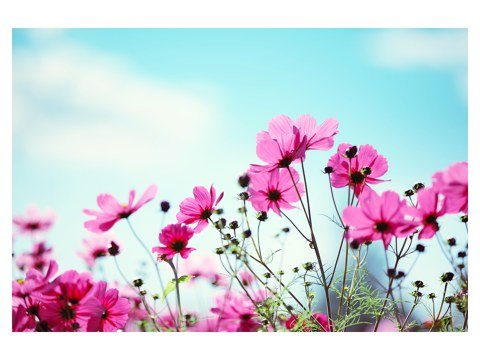 prado de flores