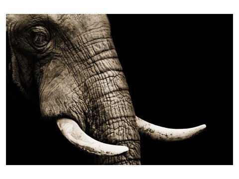 imagen del elefante