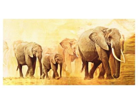 elefantes fotos