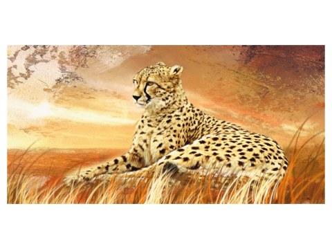 imágenes guepardo