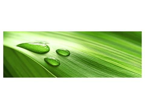 verdes fotos