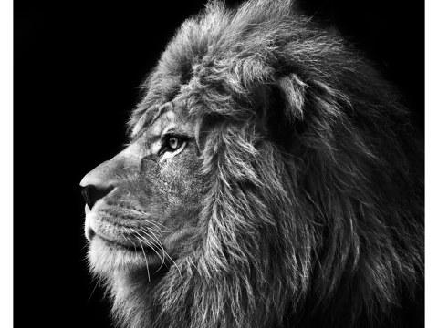 fotos de león