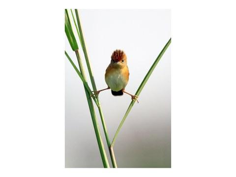 Imágenes divertidas del pájaro