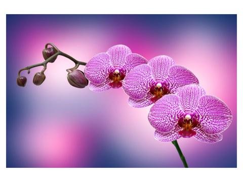 Orquídea en la lona