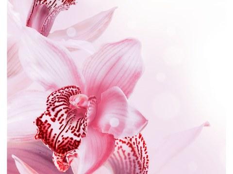 Comprar Orquídea Fotos