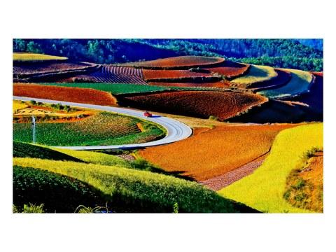 imagen del campo de arroz