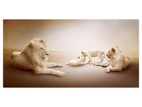 imágenes de Safari