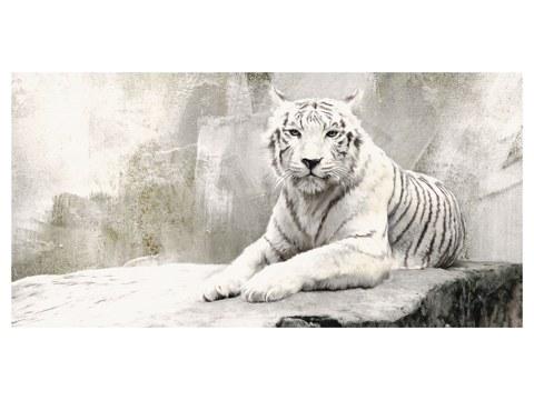 fotos de tigre