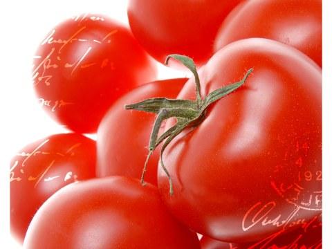 tomates fotos
