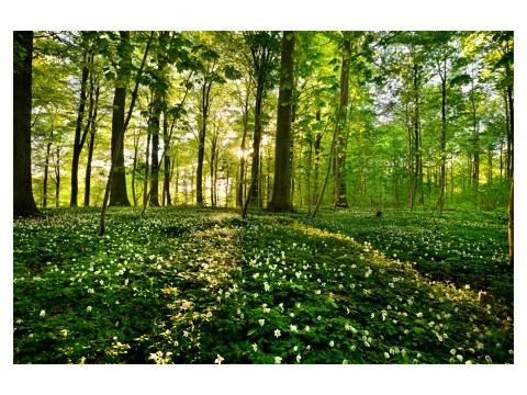 imágenes forestales
